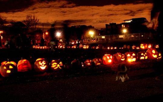 Photo of a long line of jack-o-lanterns lighting up Sorauren Avenue Park