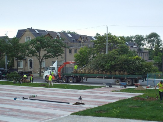 Photo of a flatbed truck carrying large trees being unloaded for planting in the new Sorauren Town Square area