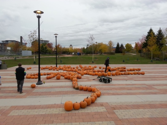 Dozens of pumpkins spread out on the patio at the Sorauren Town Square