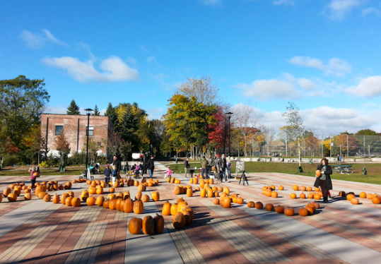 Photo of pumpkins spread out on the Sorauren Town Square under sunny blue skies